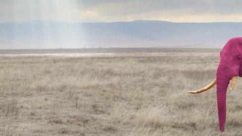 Roze Olifant rechts klein