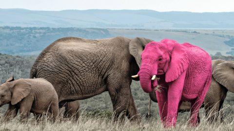 2 olifanten (beide roze)