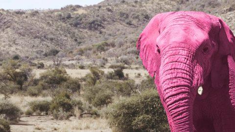 2 olifanten rechts